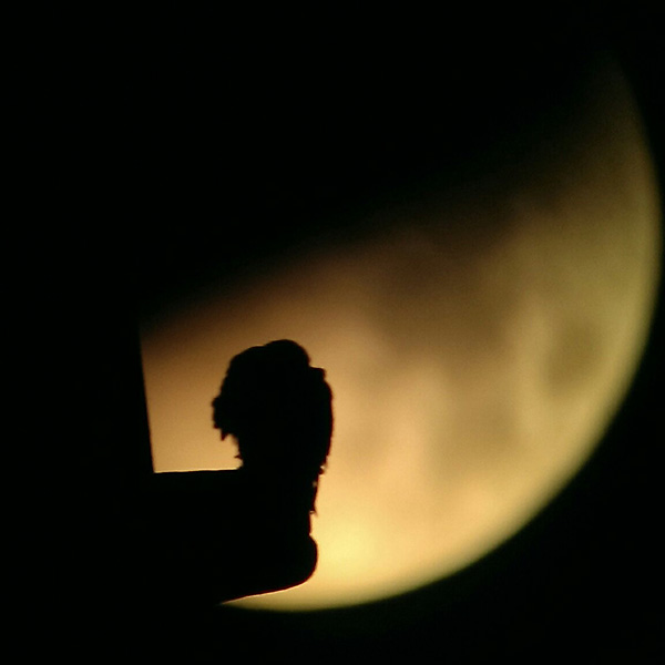 Peregrine during lunar eclipse