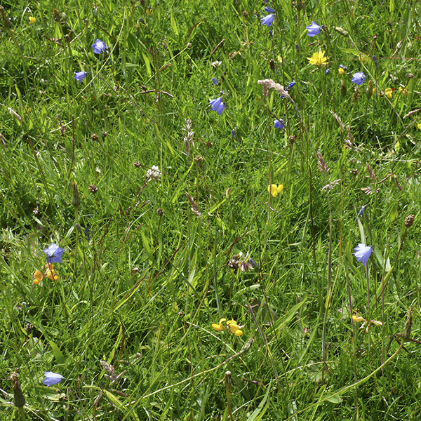 wildflowers Heath Common