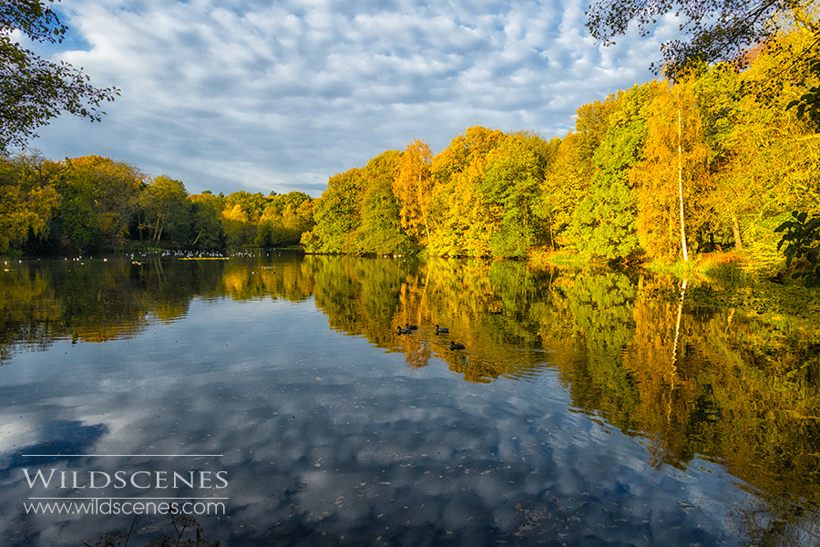 autumn colours at Nostell Priory