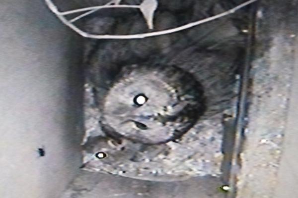 Tawny owl nest in Wakefield