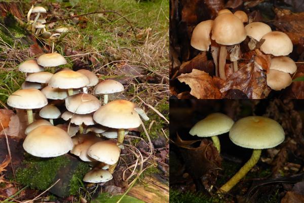 Unidentified fungi