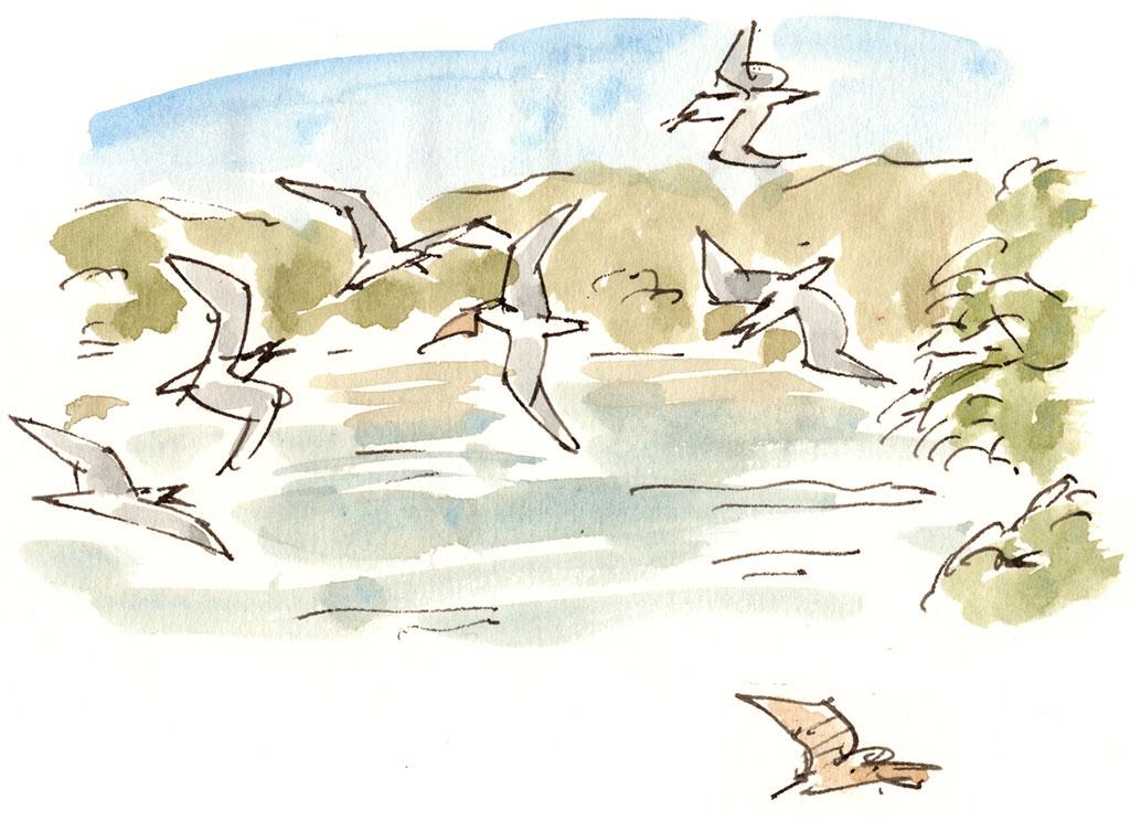 sketch of gulls