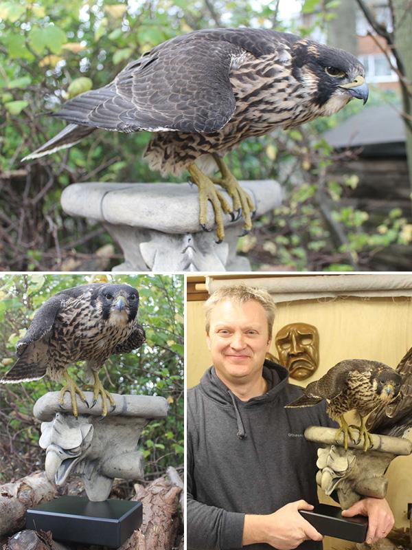 Wakefield peregrine falcon